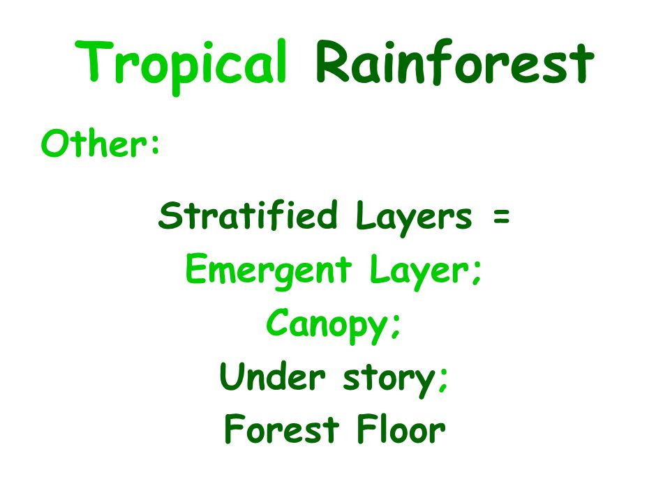 Tropical Rainforest Other: Stratified Layers = Emergent Layer; Canopy;