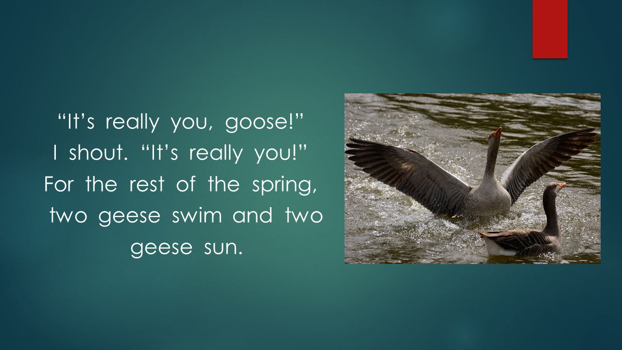 It's really you, goose. I shout. It's really you