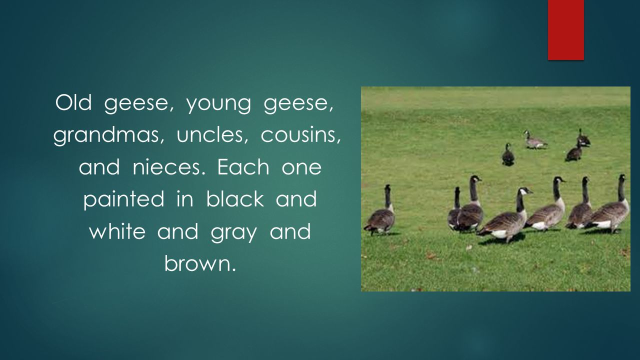 Old geese, young geese, grandmas, uncles, cousins, and nieces