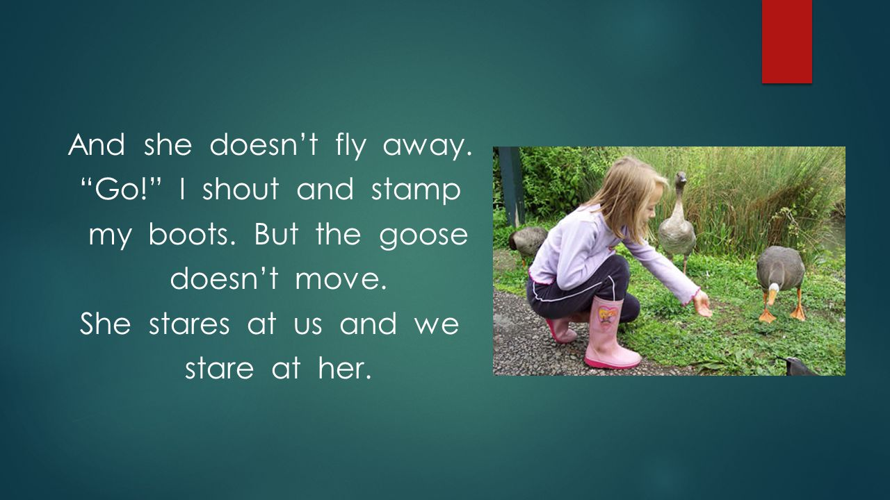And she doesn't fly away. Go. I shout and stamp my boots