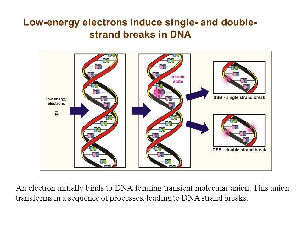 Low-energy electrons induce single- and double-strand breaks in DNA