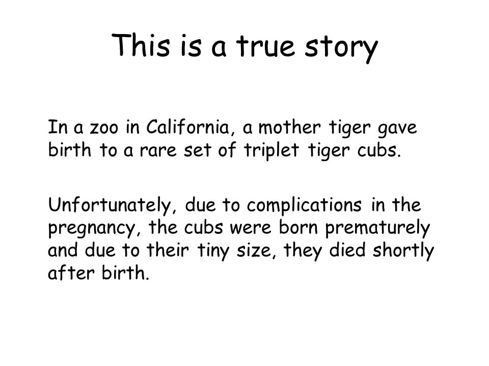 This is a true story In a zoo in California, a mother tiger gave birth to a rare set of triplet tiger cubs.