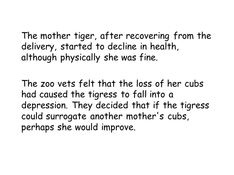 The mother tiger, after recovering from the delivery, started to decline in health, although physically she was fine.