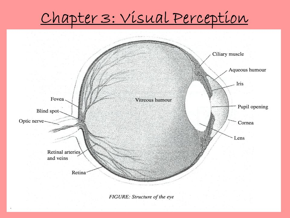 Chapter 3: Visual Perception