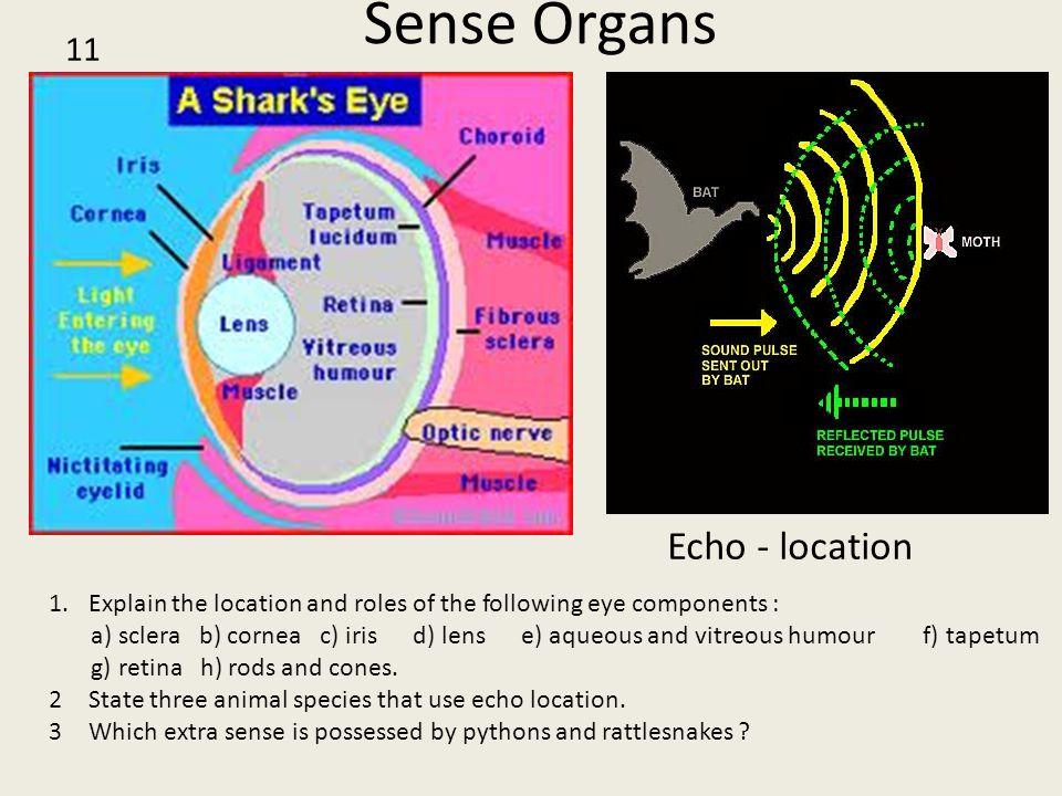 Sense Organs Echo - location 11