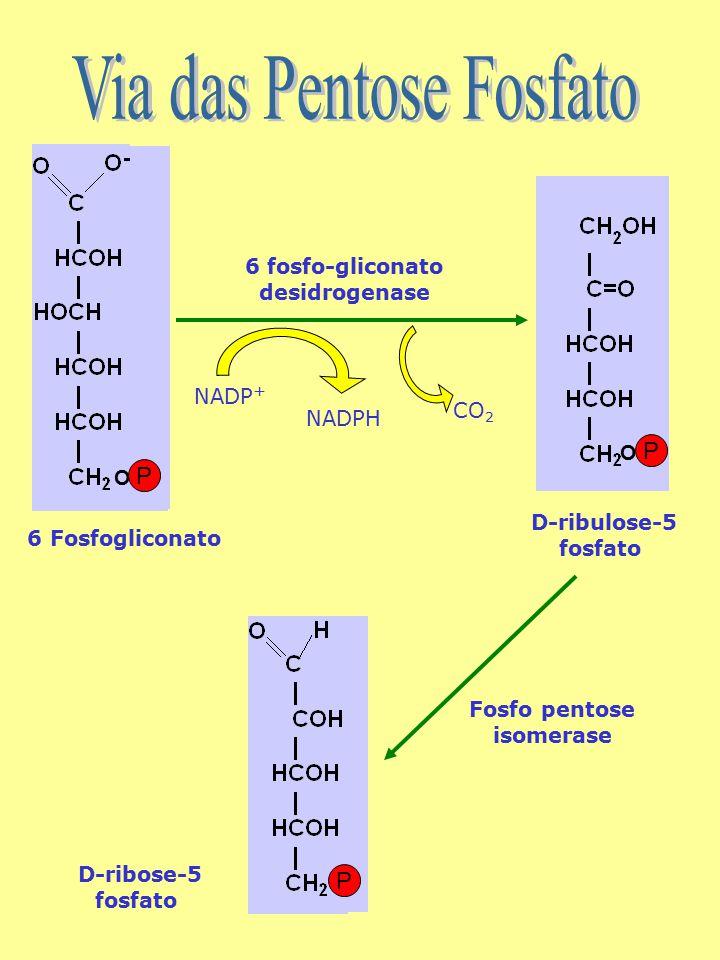 6 fosfo-gliconato desidrogenase Fosfo pentose isomerase