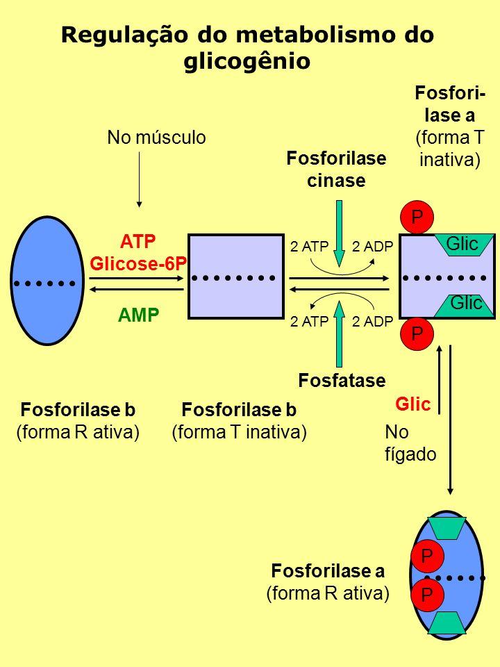 Regulação do metabolismo do glicogênio