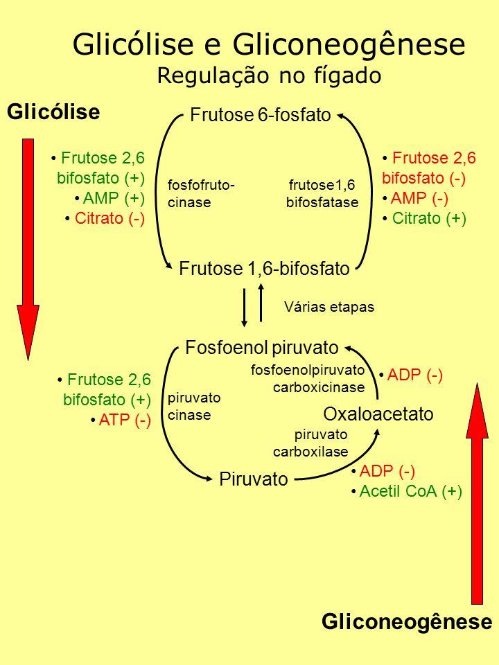 Glicólise e Gliconeogênese