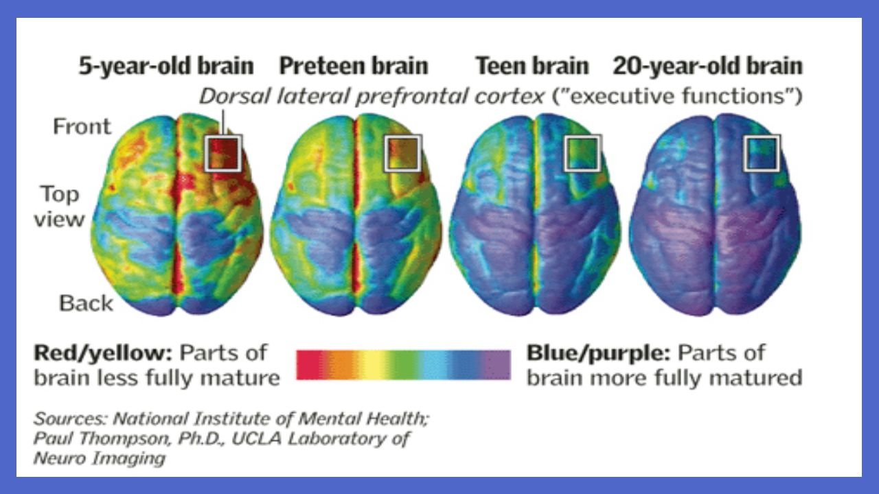 Remember who has the fully developed brain – you