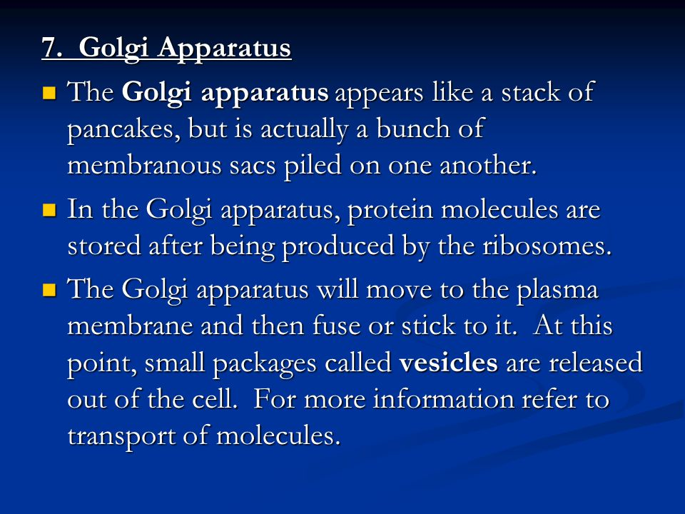 7. Golgi Apparatus The Golgi apparatus appears like a stack of pancakes, but is actually a bunch of membranous sacs piled on one another.