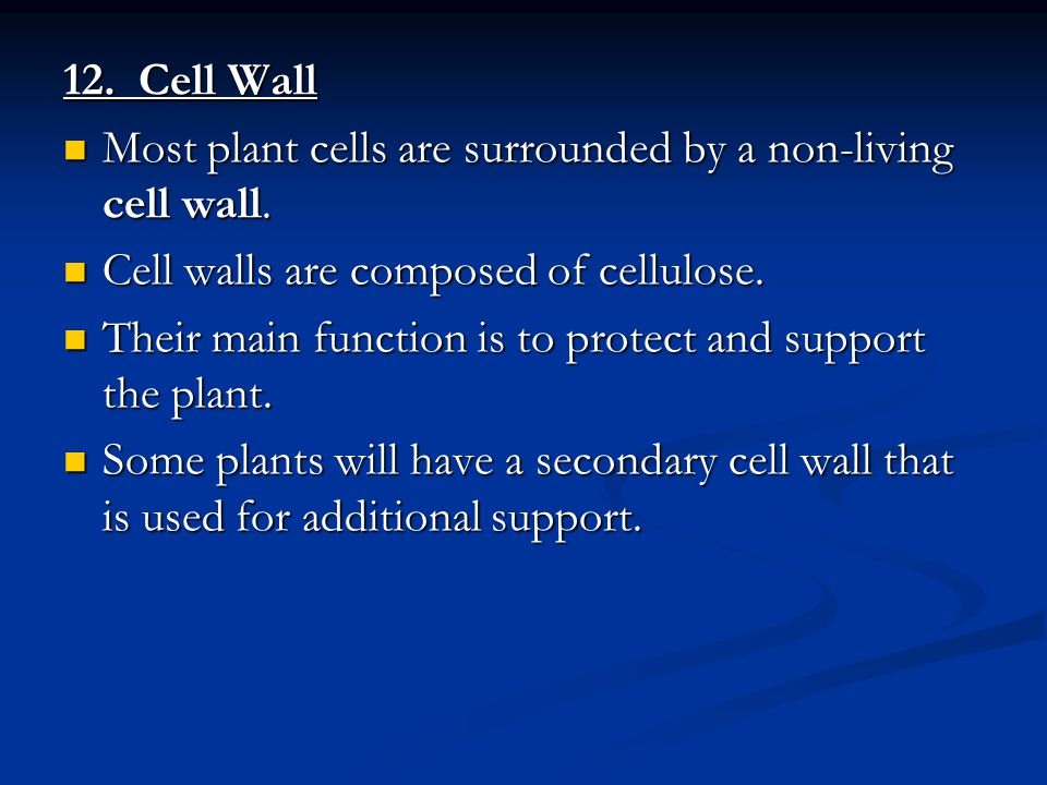 12. Cell Wall Most plant cells are surrounded by a non-living cell wall. Cell walls are composed of cellulose.