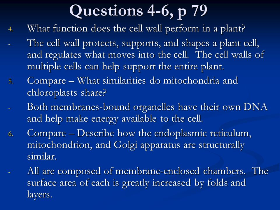 Questions 4-6, p 79 What function does the cell wall perform in a plant