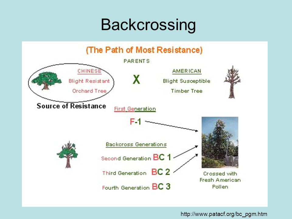 Backcrossing http://www.patacf.org/bc_pgm.htm