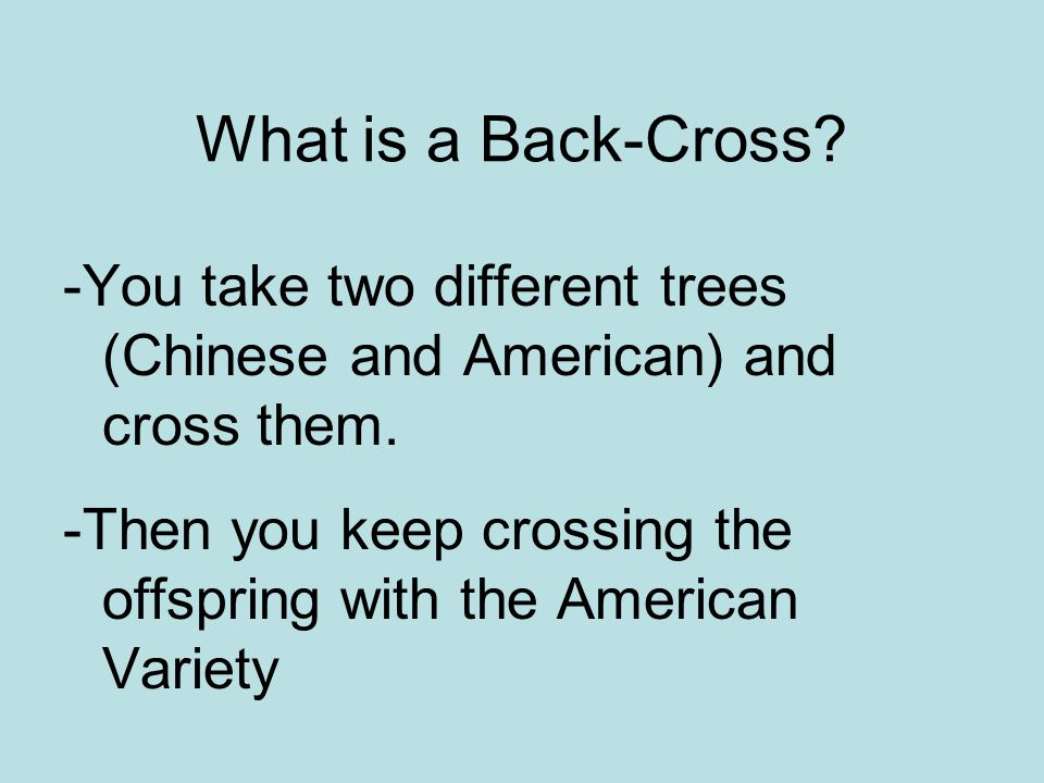What is a Back-Cross -You take two different trees (Chinese and American) and cross them.