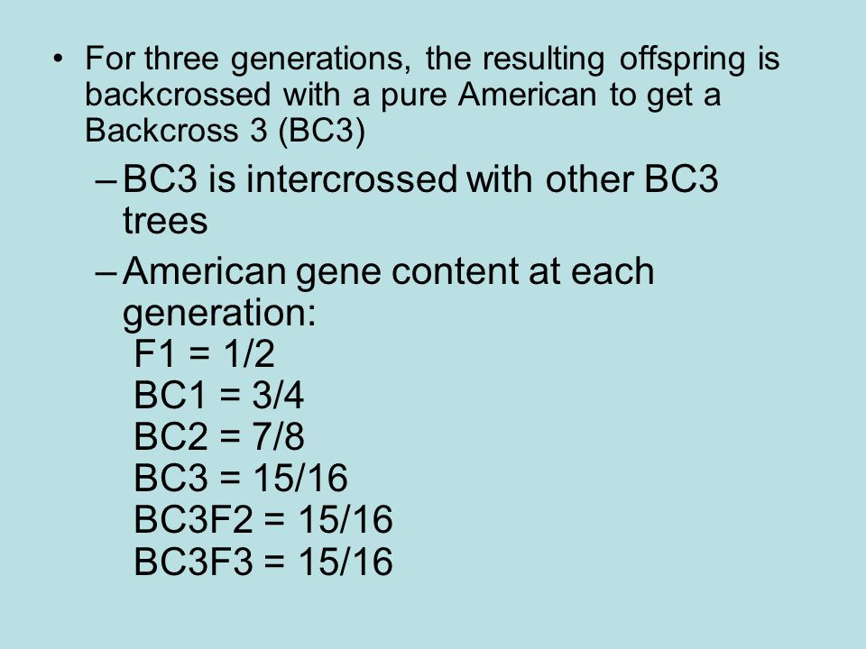 BC3 is intercrossed with other BC3 trees