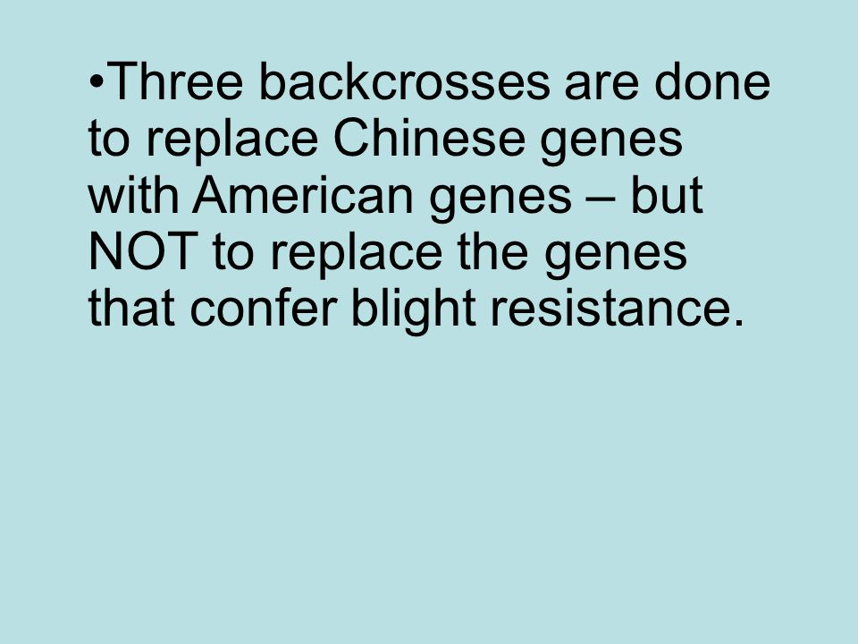 Three backcrosses are done to replace Chinese genes with American genes – but NOT to replace the genes that confer blight resistance.