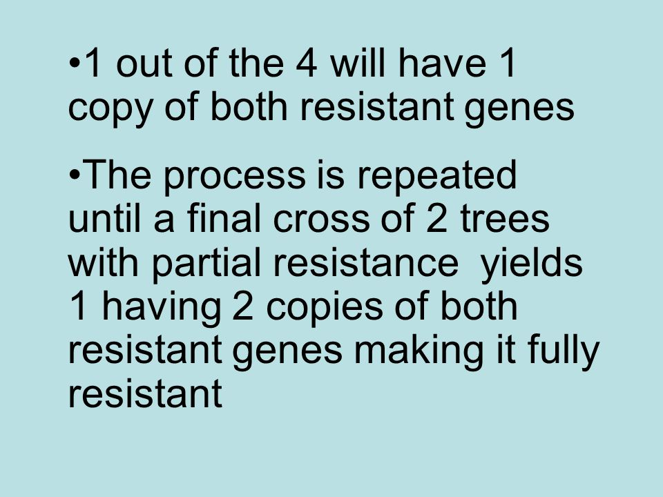 1 out of the 4 will have 1 copy of both resistant genes