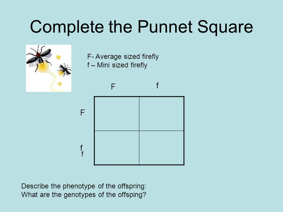 Complete the Punnet Square