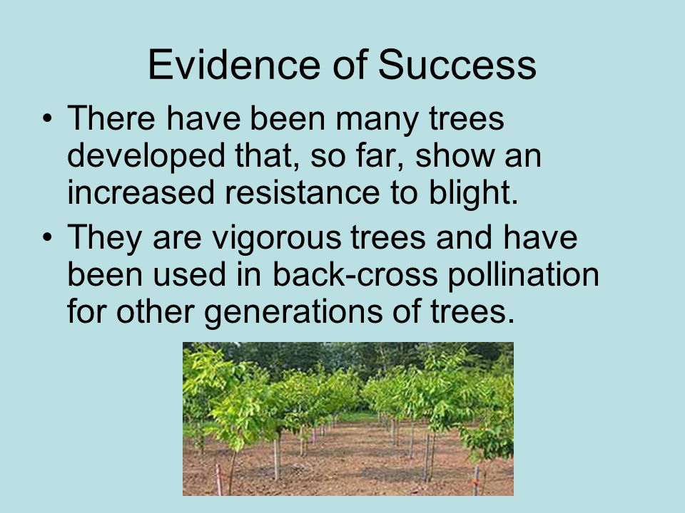 Evidence of Success There have been many trees developed that, so far, show an increased resistance to blight.