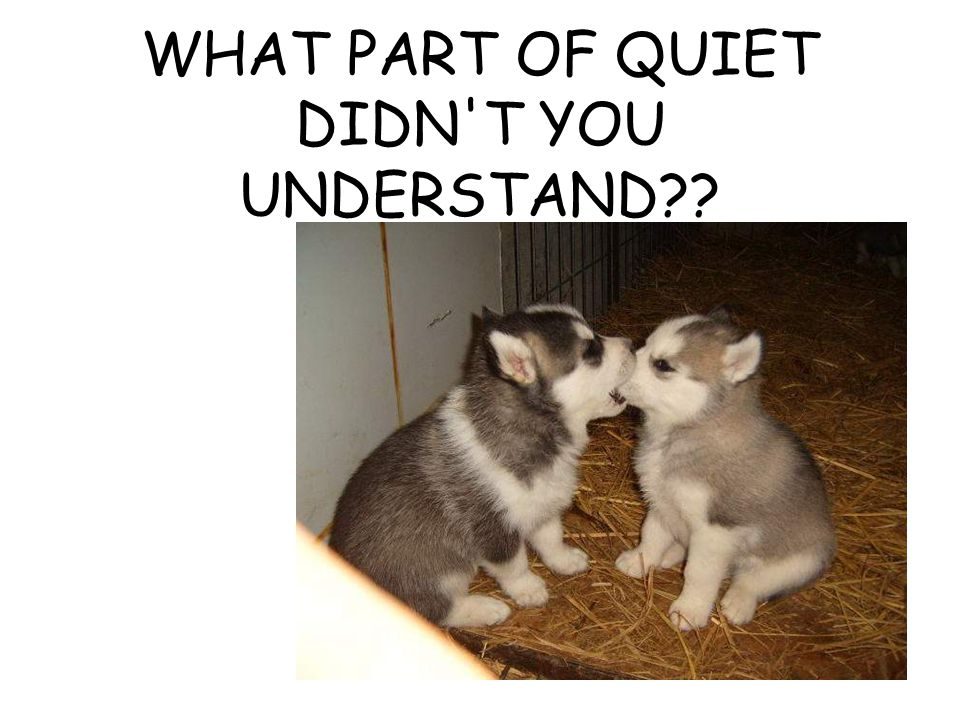 WHAT PART OF QUIET DIDN T YOU UNDERSTAND