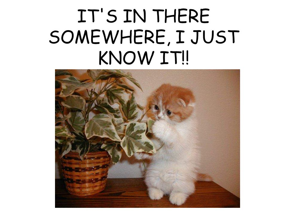 IT S IN THERE SOMEWHERE, I JUST KNOW IT!!