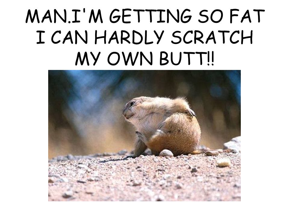 MAN.I M GETTING SO FAT I CAN HARDLY SCRATCH MY OWN BUTT!!