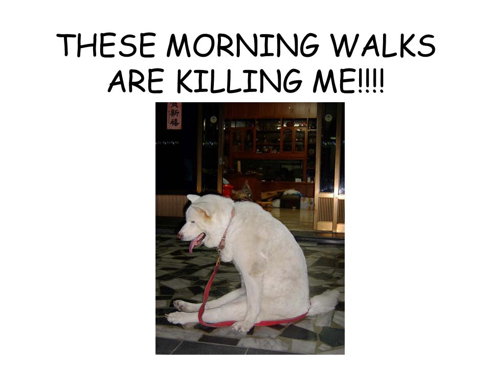 THESE MORNING WALKS ARE KILLING ME!!!!