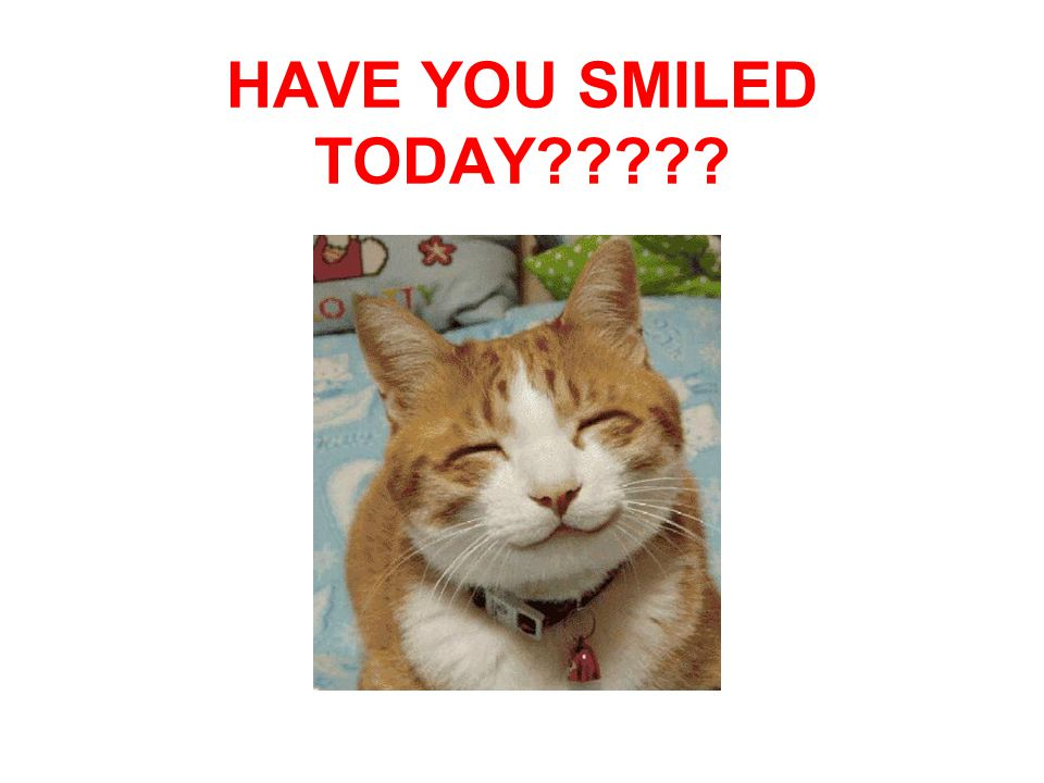 HAVE YOU SMILED TODAY