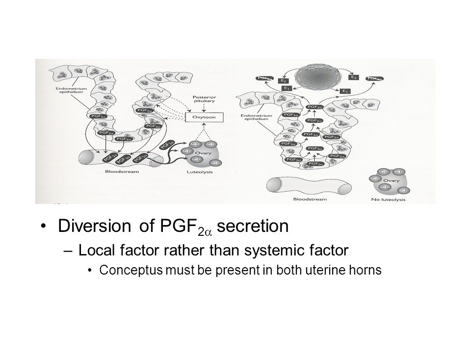 Diversion of PGF2a secretion