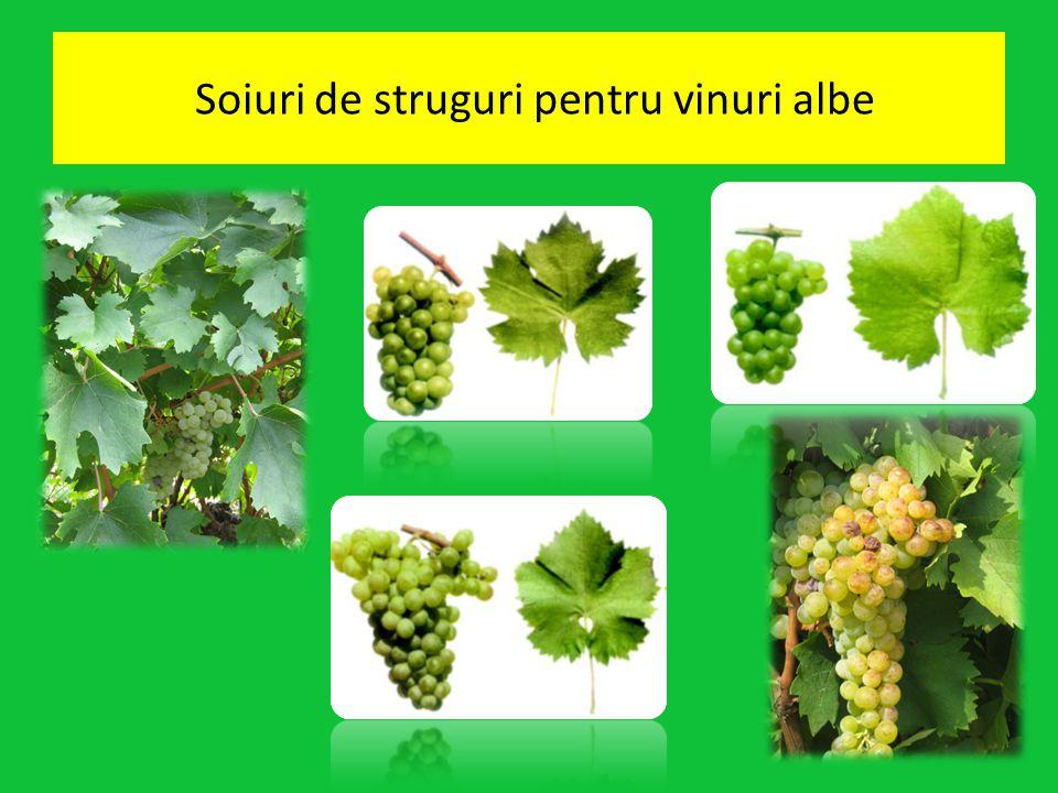 Soiuri de struguri pentru vinuri albe