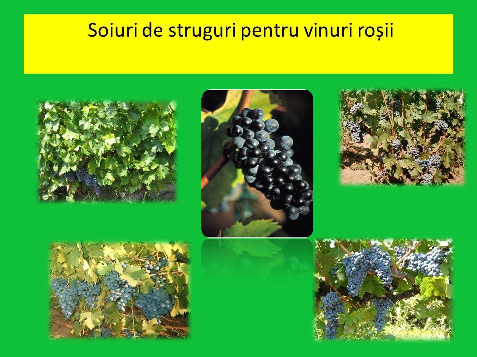 Soiuri de struguri pentru vinuri roșii