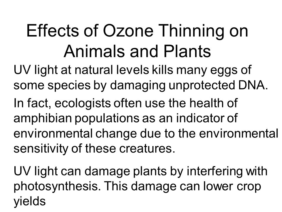 Effects of Ozone Thinning on Animals and Plants