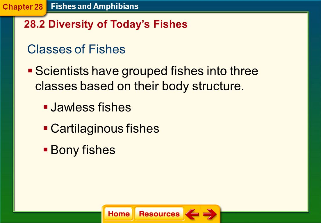 Chapter 28 Fishes and Amphibians. 28.2 Diversity of Today's Fishes. Classes of Fishes.