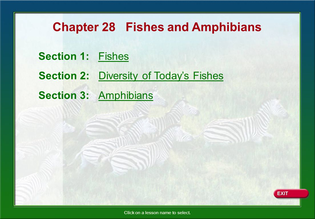Chapter 28 Fishes and Amphibians