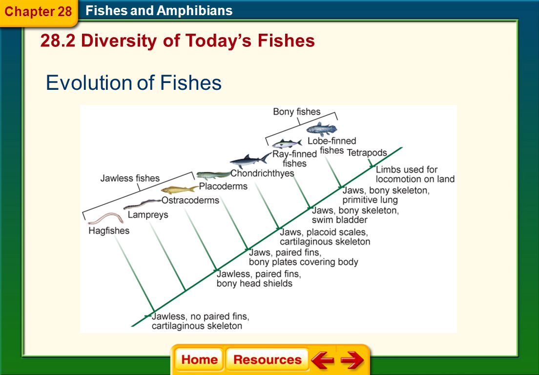 Evolution of Fishes 28.2 Diversity of Today's Fishes Chapter 28