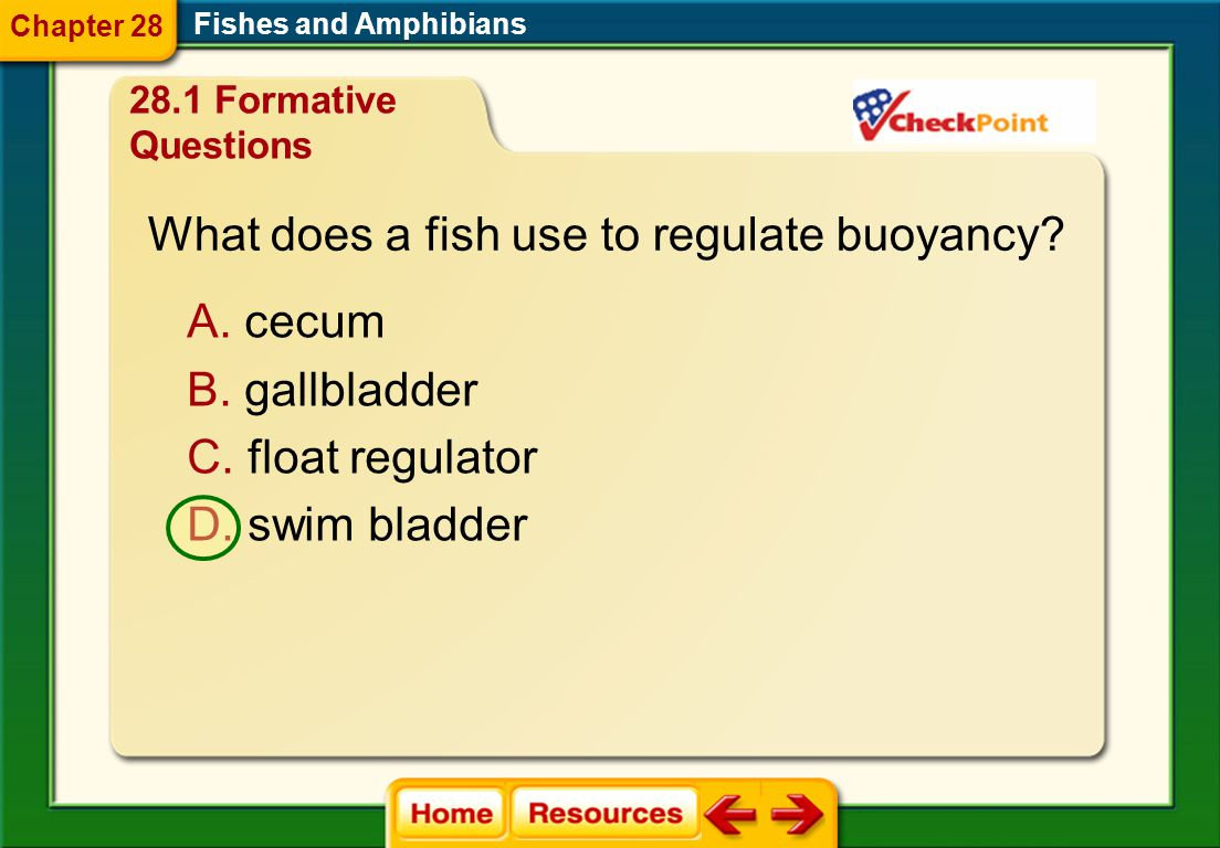 What does a fish use to regulate buoyancy