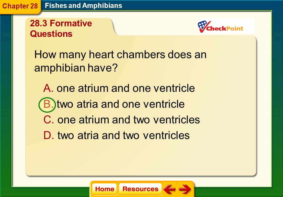 How many heart chambers does an amphibian have