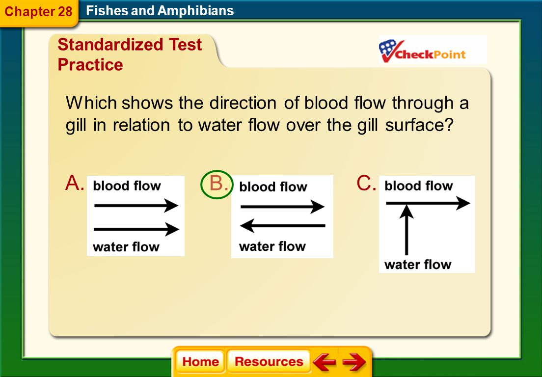 Which shows the direction of blood flow through a