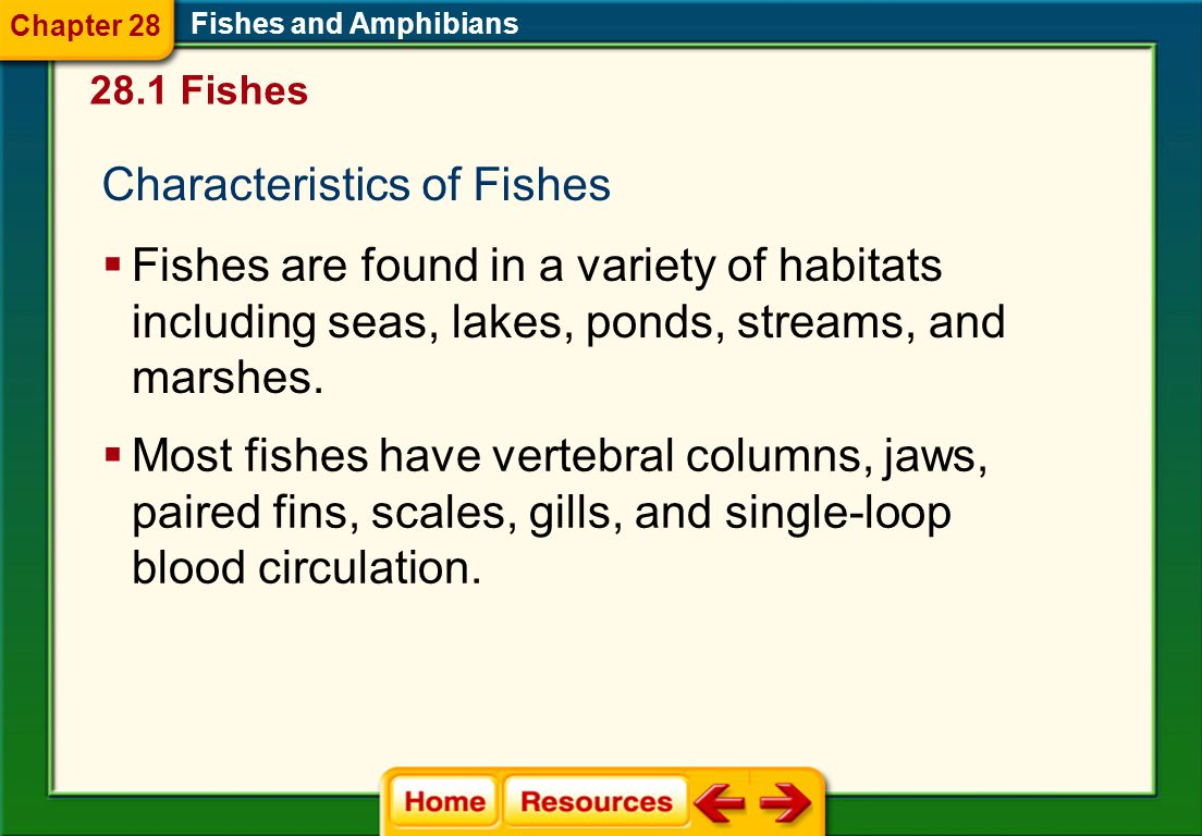 Characteristics of Fishes