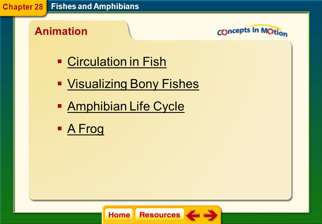 Visualizing Bony Fishes Amphibian Life Cycle A Frog