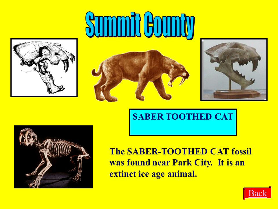 Summit County SABER TOOTHED CAT