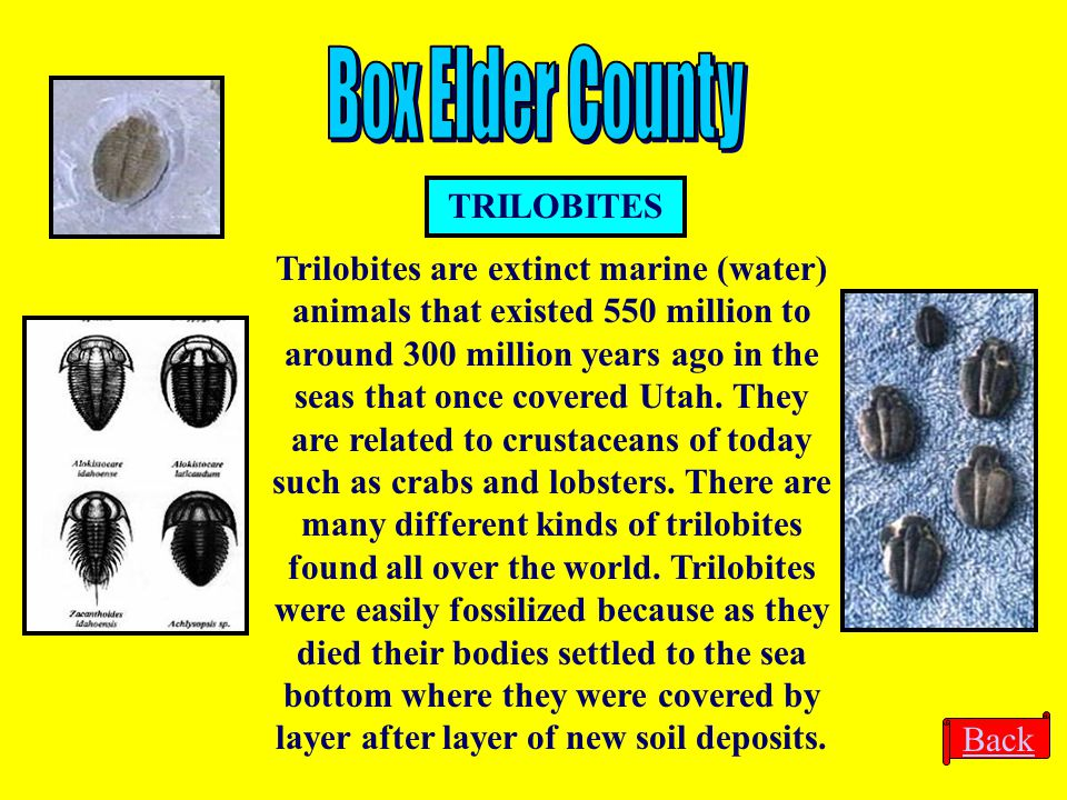 Box Elder County TRILOBITES
