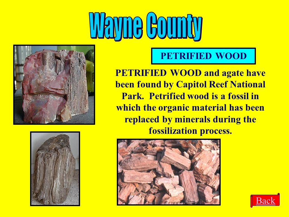 Wayne County PETRIFIED WOOD