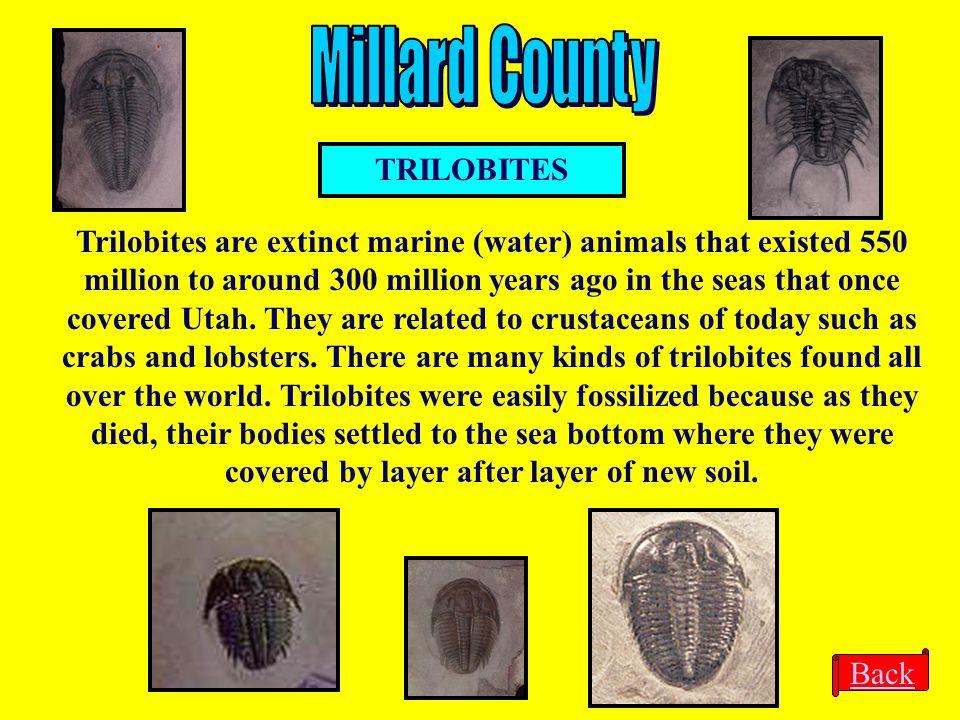 Millard County TRILOBITES