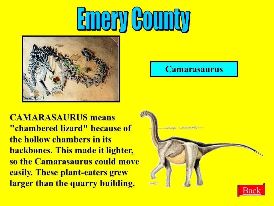 Emery County Camarasaurus