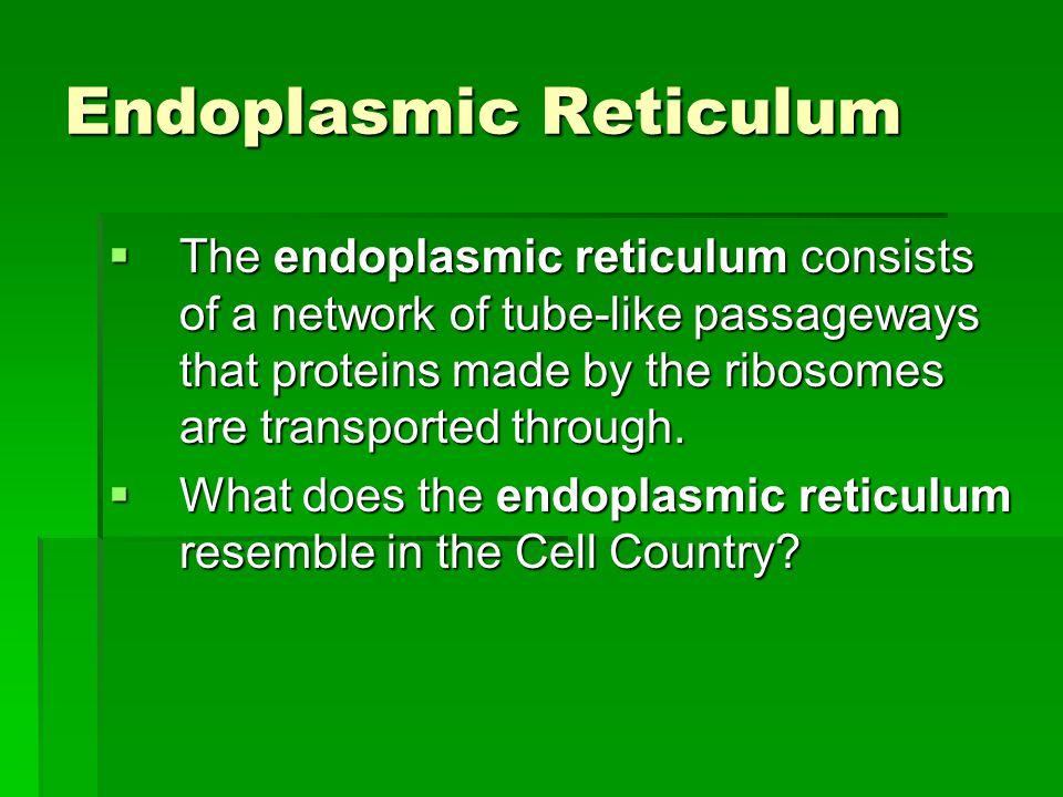 Endoplasmic Reticulum