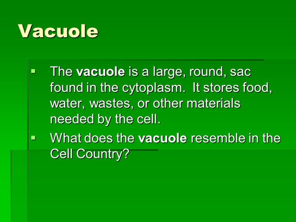 Vacuole The vacuole is a large, round, sac found in the cytoplasm. It stores food, water, wastes, or other materials needed by the cell.