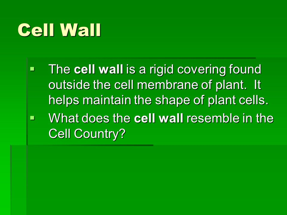 Cell Wall The cell wall is a rigid covering found outside the cell membrane of plant. It helps maintain the shape of plant cells.