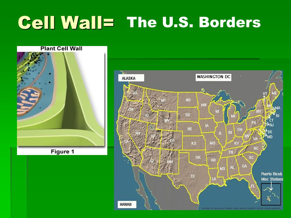 Cell Wall= The U.S. Borders