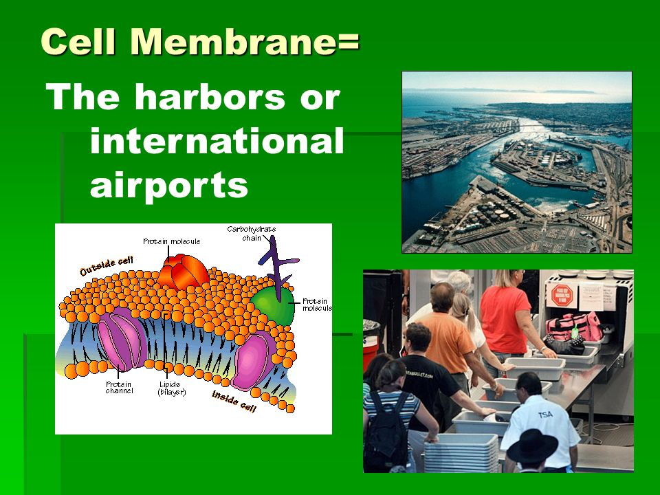 Cell Membrane= The harbors or international airports
